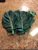 Img_20180414_112913693_burst000_cover_top_collards_green_14_apr_18
