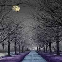 Moonlight_path