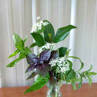 Alg_photo_herb_arrangement